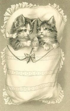 twin cats