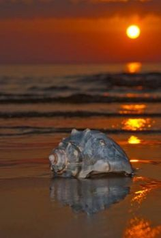 I love this photo!  Ocean Isle is one of my favorites places and Holden Beach...Ann