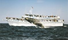 Groupon - $ 29 for a Whale-Watching Cruise from Cape Ann Whale Watch (Up to $48 Value) in Gloucester. Groupon deal price: $29