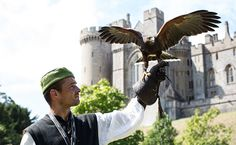 Life in a Medieval Castle Arundel Castle, William The Conqueror, Medieval Castle, Bald Eagle, Castles, Roots, Leo, England, Chateaus