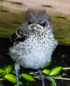 Reddit, I present to you, Grumpy Bird. - Imgur