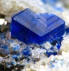 Sodalite,  Na8Al6Si6O24Cl2, Lajuar Madan, Sar-e-Sang dist., Badakhshan, Afghanistan. Euhedral crystals to 2-3mm