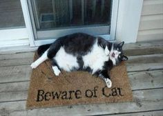 Beware of cat  My cat is an orange tabby , but we need this for him. He growls at people he does not like and lets us know if someone/thing is outside.