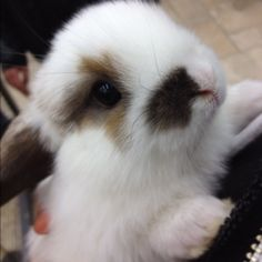 I hope my babies rabbit like this!