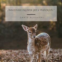 Dark Green Deer Photo Animal Rights Poster Wildlife Photography, Animal Photography, Disney Photo Frames, As The Deer Pants, Psalm 42, Happy Sabbath, Sabbath Rest, Deer Photos, Mom Jokes