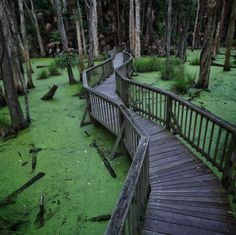 How eerily beautiful is this moss-covered landscape at Couran Cove in South Stradbroke Island? | 17 Amazing Places To Go On The Gold Coast That Aren't The Beach