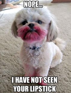 Silly puppy! Be sure to stop by Dr. Bucko's office for your Jane Iredale PureMoist #lipstick in your favorite #holiday shade! #Belladerma www.drbucko.com