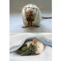 So there's a woman who makes bears for mice <3