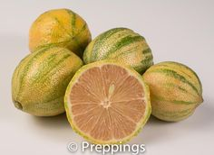 Pink Variegated Eureka Lemon :: Search by flavors, find similar varieties and discover new uses for ingredients @ preppings.com