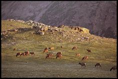 "Visual #BibleVerseoftheDay: Jeremiah 27:5 and Elk Grazing on a Plateau, Rocky Mountain National Park, Colorado.  ""With my great power and outstretched arm I made the earth and its people and the animals..."" CLICK THE PHOTO to be blessed with the complete passage. http://visualverse.thecreationspeaks.com/great-powerful/"
