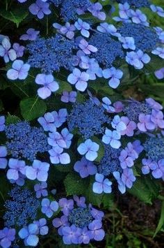 Studio Floral Dora Santoro: Flores Azuis