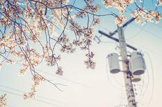 ¡En primavera la ciudad también florece y todo parece llenarse de energía!