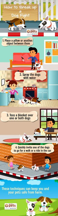 how to break up a dog fight wag