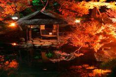 momiji, #maple, #Illuminated, #pond, #night,
