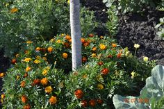 Какие растения можно сажать под деревьями? Несколько советов по выбору растений для посадки под деревьями