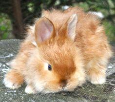 Satin Angora Bunny