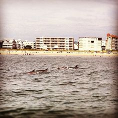 Gotta love catching a glimpse of dolphins jumping off shore at the beach.