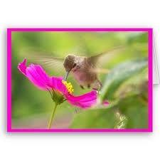 humming bird, beautiful
