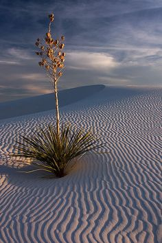 White Sands, NM  I do miss this!