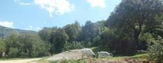 Animals in Lanaitto valley