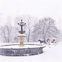 Caught in a magical snowstorm in Central Park