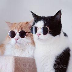 Encontre este Pin e muitos outros na pasta Gatos de Gisele Bündchen. - Cats and Kittens - Gata Cute Kittens, Cats And Kittens, Animals And Pets, Baby Animals, Funny Animals, Cute Animals, I Love Cats, Crazy Cats, Cool Cats