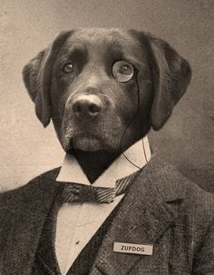 Man's Best Friend can also be very well dressed