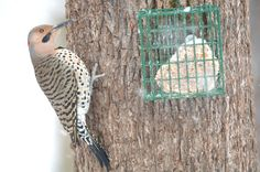 Try Your Hand at Making Your Own Suet