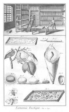 Agriculture and Rural Economy – Raising Silkworms. Precious then - precious today.