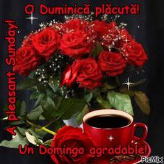 Beautiful Roses, Sunday, Facebook, Domingo