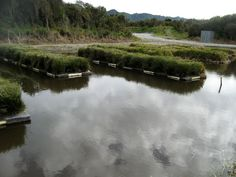 Floating wetlands - location unknown