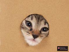 でっ・・・出れないニャ・・・/猫 ネコ cats  (Nestle PURINA ネスレ日本)