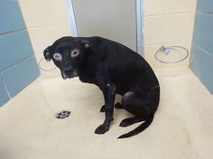 Please share to get Macho out of the shelter and where he can be helped
