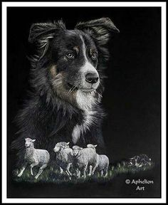 Scratchboard and watercolor piece sized and submitted to the Meeker Sheepdog Trial art contest for where it was sold and also won the People's Choice Award. Black Paper Drawing, Scratchboard Art, Glass Engraving, Scratch Art, India Ink, Horse Art, Bird Art, Pet Birds, Pencil Drawings