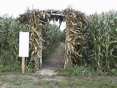 corn mazes .... so creepy and so fun