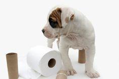Cómo eliminar el olor a orina de perro