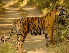 Wildlife of India 2012 - schueystar's Photos