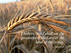 Psalm I would have despaired unless I had believed that I would see the goodness of the LORD In the land of the living. Psalm 27, Psalm 119 105, Proverbs 27, Bible Scriptures, Bible Quotes, Scripture Verses, Land Of The Living, My Salvation, Memory Verse