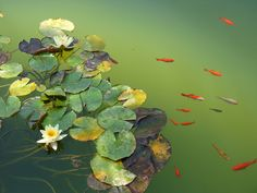 Lily pond, Alhambra by annamlibra on flickr