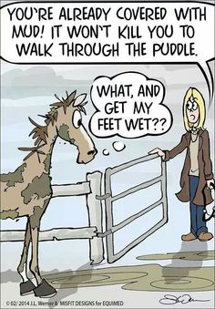 What, and get my feet wet?? #horses soooo hombre. Will go through mud all day but won't cross a tiny stream