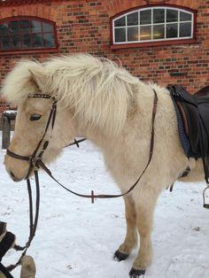 """Från """"Carro - från pikeurstrumpa till raggsocka"""" #hästar #Canazei"""