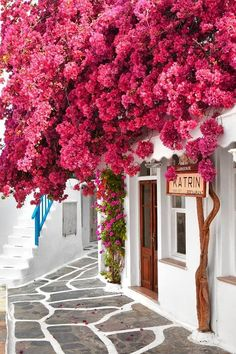 Mykonos is simply beautiful Tag your love one! Mykonos is simply beautiful Tag your love one! Pic by for a feature Beautiful Flowers, Beautiful Places, May Flowers, Simply Beautiful, Photos Voyages, Bougainvillea, Travel Aesthetic, Greek Islands, Santorini