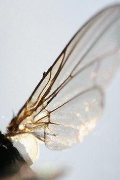 Imagem de wings