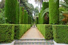 Bild von umfangreichen Topiari Garten und Gehweg gepflegten Hecke gekrönt mit Topiari Säulen
