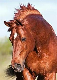 this looks just like my Arabian, Sundance, son of Magic Dream