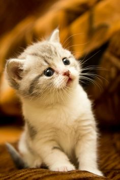 How cute is this kitten