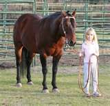 Foundation Quarter Breeders Stud Mare Horses