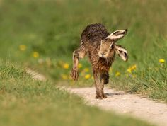 A running hare, fighting ponies and a cat that adopted orphan squirrels Animals And Pets, Cute Animals, Animals Photos, Animal Pictures, Wild Elephant, Baby Squirrel, Tier Fotos, Animal Drawings, Drawing Animals