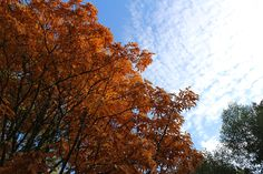 Почему осенью листья меняют цвет? Ответ на этот вопрос мы узнали еще будучи детьми на уроках естествознания в школе или от родителей во время прогулки по парку. С тех пор прошло много лет и давайте признаемся, кто из нас не задается этим вопросом, замечая, как листья с наступлением осени меняют цвет? #москва #осень #вднх
