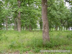 Nice level lot #13 in a private, country subdivision. Private Lake for lot owners. Water and Electric available in Macks Creek MO